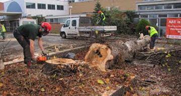 Tree Surgeon Peterborugh