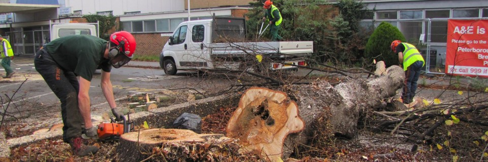 A Team of Fully Qualified Arboriculturalists.  Specialists in Tree Surgery, Maintenance and Tree Reports.