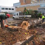 Tree surgery in Stamford and Spalding