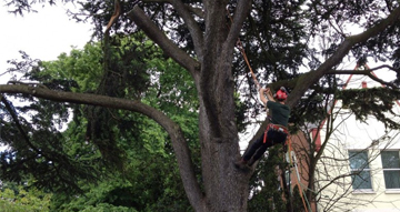 Tree Surgeon Peterborough