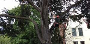 local landscaping company tree surgery