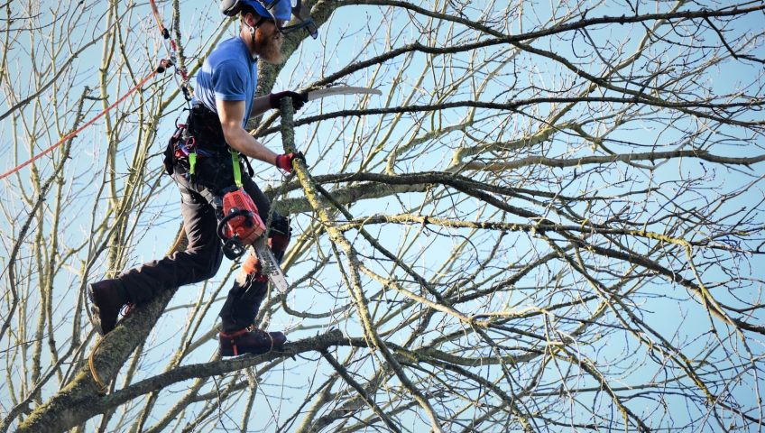 Arborist for Tree Surgery